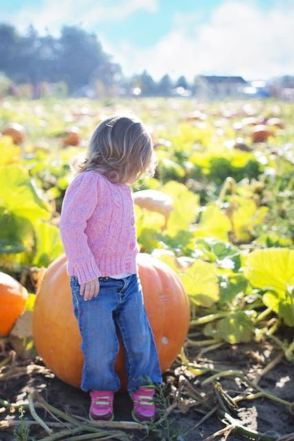 giant-pumpkins-955603_640